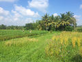 Untouched-Bali-Scooter-Tour-11.jpg